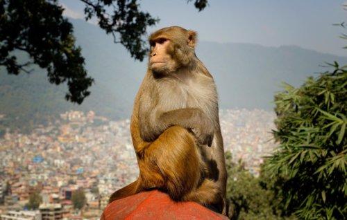 Boss, King ve Swayambhunath