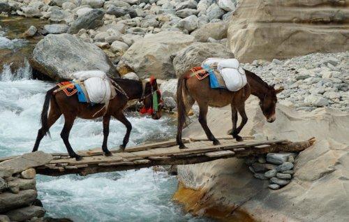 Muly na treku