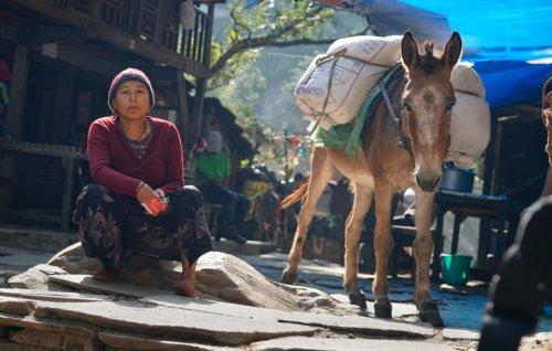 Byla pani v Tatopani a šel kolem kůň